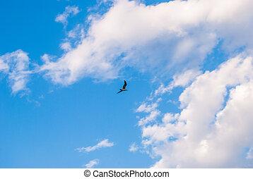 beau, bleu, nuages, ciel, essor, blanc, mouette