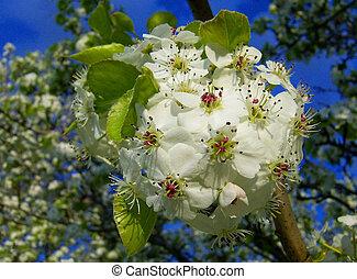 beau, bloom., très, tee, fleur, fleurs blanches