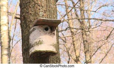 beau, boîte, fait, maison, bouleau, nesting, coffre, oiseau