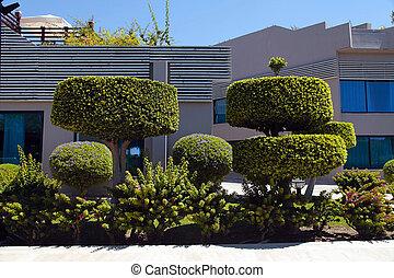 beau, bonsai, jardin, arbres, manucuré, buissons
