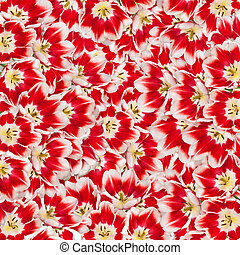 beau, bouquet, tulipes, fond, fleurs, rouges