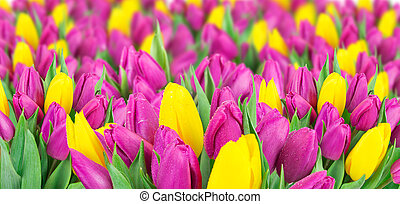 beau, bouquet, tulips.