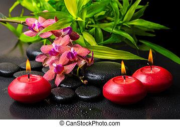 beau, brindille, fleur, spa, phalaenopsi, composition, rouges, orchidée