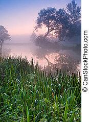 beau, brumeux, levers de soleil, paysage, sur, rivière, à, arbres, et, sunb
