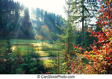 beau, brumeux, vieux, pré, nature, matin, scene., forêt automne