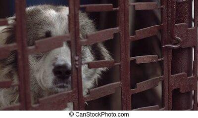 beau, cage, séance, grand, métal, chien, regarder, tristesse...