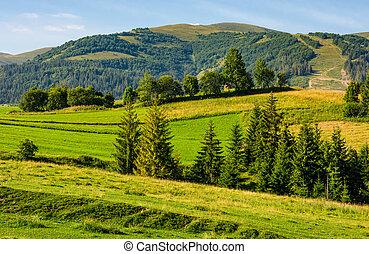 beau, campagne, coteau, arbres