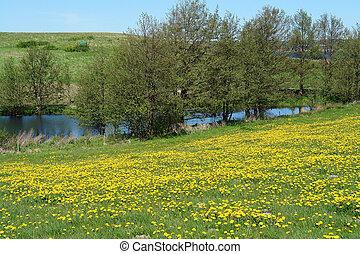 beau, campagne, lac, printemps, été, paysage