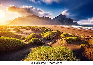 beau, cap, collines, stokksnes, vue, sunlight., jaune, ...