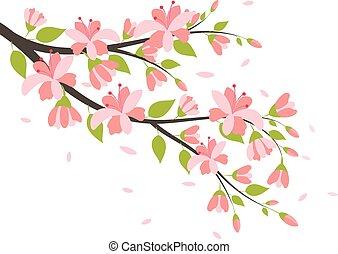 beau, cerise, branches, fleur