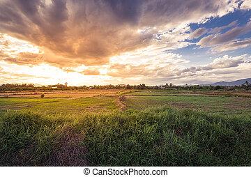 beau, champ, coucher soleil, pré