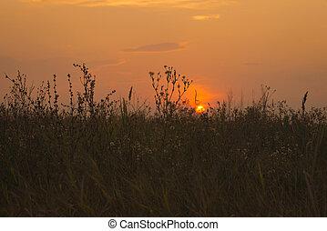 beau, champ, sur, coucher soleil