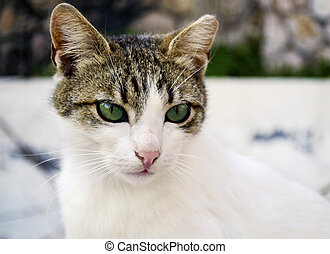 Beau gris yeux chat vert photographie de stock rechercher des images et des photos clipart - Yeux vert gris ...
