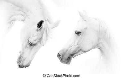 beau, chevaux, blanc, deux