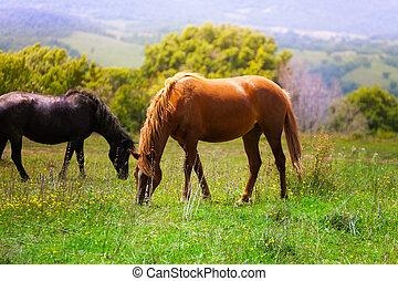 beau, chevaux, deux, champ