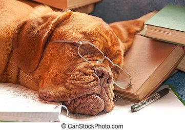 beau, chien, dormir