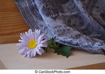 beau, chinensis, fleur, -, asters, callistephus