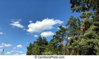 beau, ciel bleu, contre, arbres verts, forêt