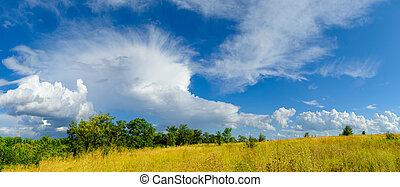 beau, ciel, champ jaune, dramatique, forêt verte, sous