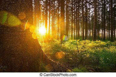 beau, clair, printemps, rayons, silencieux, soleil, forêt