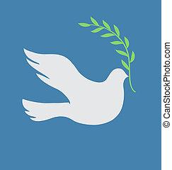 beau, colombe blanc
