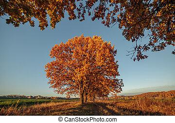 beau, concept, magie, feuilles, -, arbres, automne, harmonie, paysage, relaxation, baissé, valley.