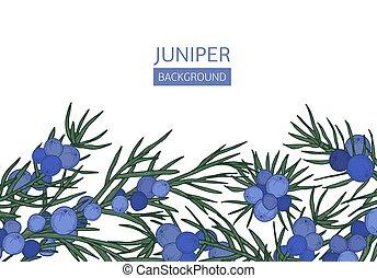 beau, conifère, ou, illustration., genièvre, fond, feuilles,...