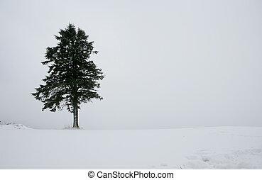 beau, corée, hiver, daegwallyeong, paysage, sud