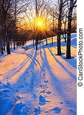 beau, coucher soleil, dans, a, hiver, parc