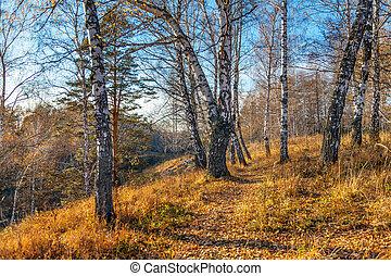 beau, coucher soleil, dans, automne, forest.