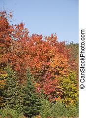 beau, couleurs, automne