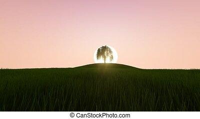 beau, croissant, arbre., levers de soleil
