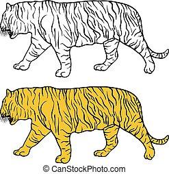 beau, croquis, illustration, tigre, arrière-plan., vecteur, blanc