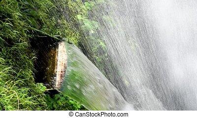 beau, descendant, flotter, eau, chutes d'eau, végétation