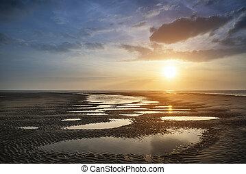 beau, doré, été, vibrant, sur, plage coucher soleil, paysage