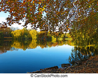 beau, doré, automne, lac