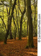 beau, Doré, vif, automne, forêt, Automne, paysage