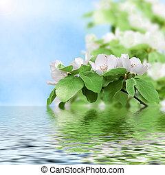 beau, eau, fleurir, reflété, pêche