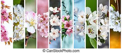 beau, ensemble, cerise, fleurir, closeup, macro, fleurs