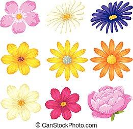 beau, ensemble, fleur