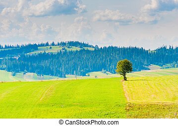 beau, ensoleillé, arbre, champ, jour, paysage