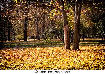 beau, ensoleillé, automne, parc, jour