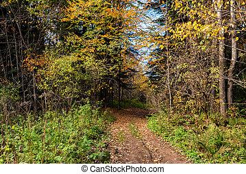 beau, ensoleillé, forêt automne, sentier, vue