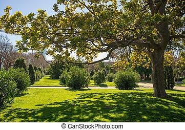 beau, ensoleillé, parc, jour