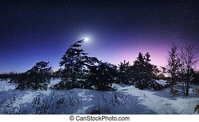 beau, entiers, hiver, lune,  Ukraine, forêt, nuit