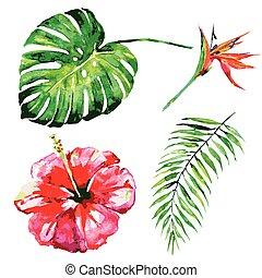 beau, exotique, feuilles, fleurs, aquarelle, paume