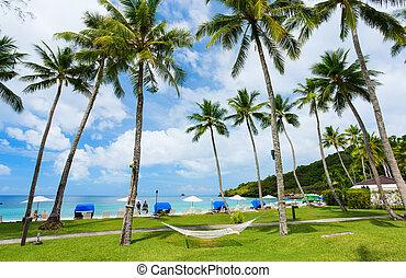 beau, exotique, plage, île tropicale
