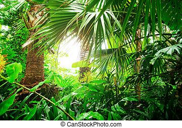 beau, exotique, wallpaper., leaves., exotique, jungle., ...