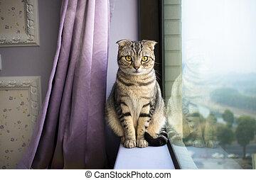beau, fenêtre, séance chat