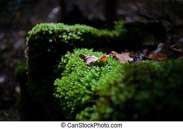 beau, feuille, lumière soleil, automne, vert, mousse